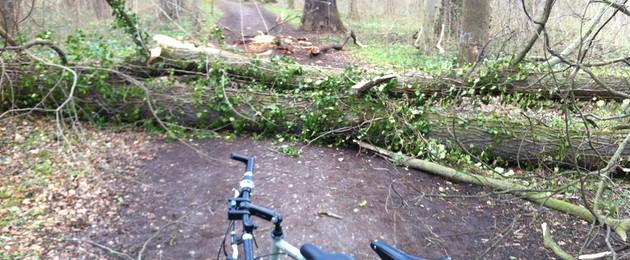 Ein Fahrrad steht im Park vor einem umgestürzten Baum