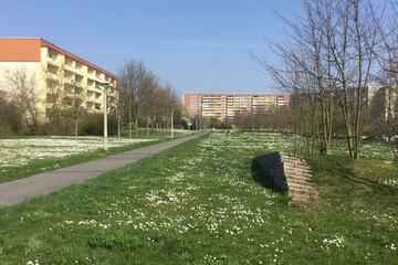 Bild wird vergrößert: Der Blick geht über eine große Wiesenfläche mit Frühlingsblühern in Richtung fünfgeschossigen Plattenbau.