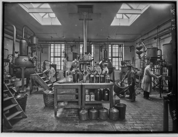 Menschen bei der Arbeit in einer Fabrik für ästhetische Öle, historische Aufnahme