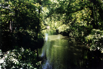 Bild wird vergrößert: Floßgraben im Leipziger Auenwald mit vielen Bäumen und Büschen