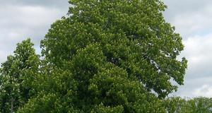 Baum an einer Straße