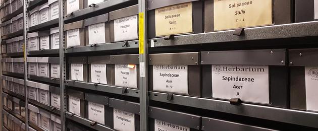 Regale bis oben gefüllt mit Pappkästen, in denen die Herbaarsammlungen aufbewahrt werden.