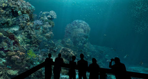 Unterwasseransicht eines Korallenriffs mit Besuchern die dieses betrachten.