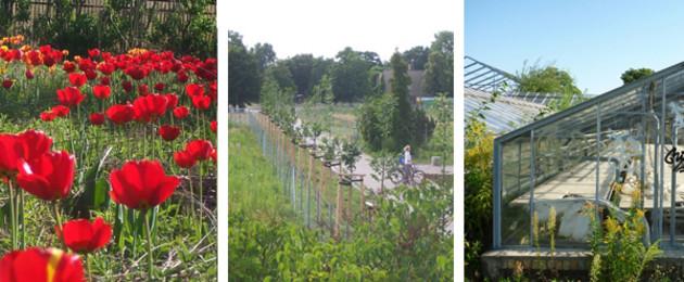 Bildcollage: Blühende Tulpen, Radweg, verfallene Gewächshäuser