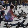 Zwei Personen hocken zwischen unzähligen Tauben auf dem Hauptmarkt in Krakau