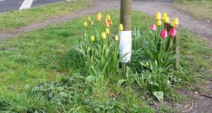 Blumen an einem Baum als Baumscheiben Bepflanzung in Leipzig.