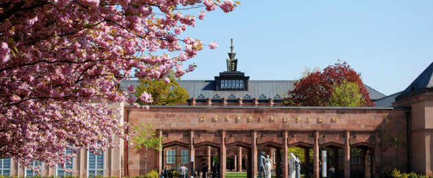 Kirschblüte vor dem Eingangsportal des Grassimuseums