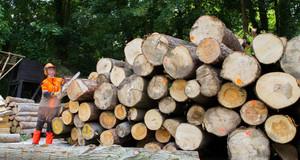 Ein großer Stapel Holzstämme. Am Rand steht ein Mann in Arbeitskleidung mit Schutzbrille und Kettensäge