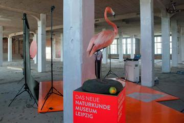 Bild wird vergrößert: Blick in die Industriehalle, die künftig das Naturkundemuseum sein wird. Im Vordergrund ein Flamingo als Tierpräparation