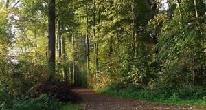 Laubbedeckter Weg im Auwald Leipzig