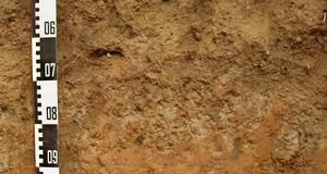 Bodenprofil Parabraunerde mit einem Maßstab
