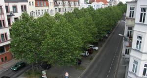 Straßenbäume auf dem Mittelstreifen einer Straße
