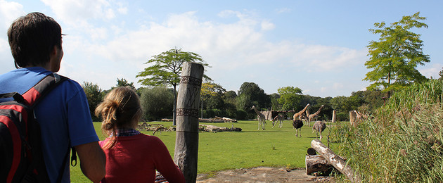 Kiwara-Savanne im Zoo Leipzig mit Giraffen