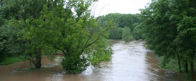 überflutete Wiese mit Bäumen