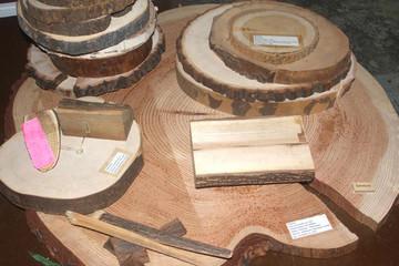 Bild wird vergrößert: Verschiedene kleinere Baumscheiben liegen übereinander auf einer großen Baumscheibe.