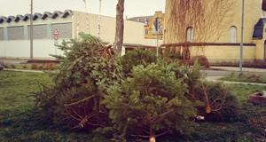 mehrere ungeschmückte Weihnachtsbäume liegen auf einer Wiese zur Abholung bereit