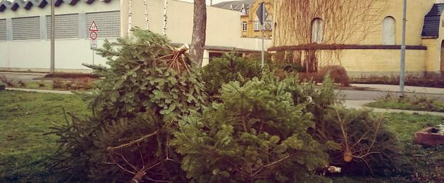 Weihnachtsbaum leipzig abgabe