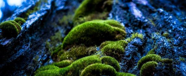 Moos auf Baumrinde im Wald