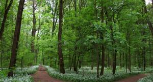 Weg im Leipziger Stadtwald / Auenwald