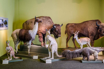 Bild wird vergrößert: Ter Mer Grossplastiken Naturkundemuseum