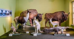 Ter Mer Grossplastiken Naturkundemuseum