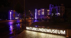 Leuchtreklame mit dem Schriftzug Naturkundemuseum in der Nacht