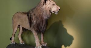 Loewe Tamrin 2 Naturkundemuseum