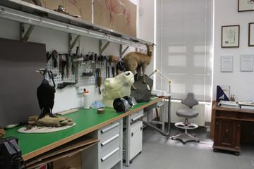 Bild wird vergrößert: Präparationswerkstatt im Naturkundemuseum Leipzig