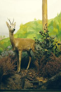 Bild wird vergrößert: Diorama 2 Naturkundemuseum