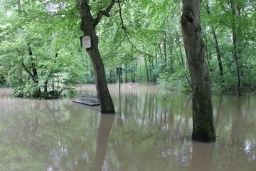 Bild wird vergrößert: Vorderansicht der überschwemmten Burgaue im Leipziger Auwald während des Hochwassers 2013