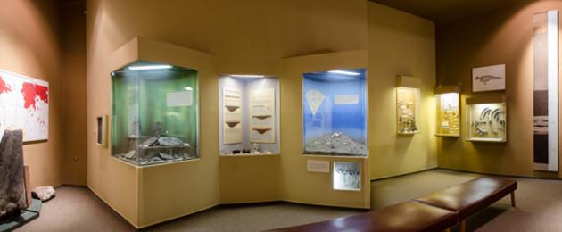 Ausstellungsraum mit verschiedenen Vitrinen im Naturkundemuseum