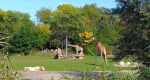Giraffen und Antilopen in der Kiwara Savanne des Zoo Leipzig