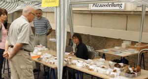Fachgruppe Mykologie zeigt Pilze während einer Pilzausstellung