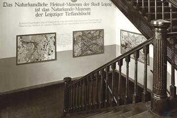Bild wird vergrößert: Historisches Foto des Treppenaufganges im Naturkundemuseum Leipzig