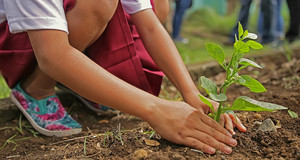 Zu sehen sind die Beine und Arme eines Mädchens im roten Rock, welches eine Pflanze in die Erde bringt.
