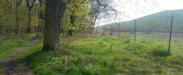 Zu sehen ist der große Lindenthaler Deponiekörper und zwei unbefestigte, unausgebaute Wege. Der eine Weg führt links in den Wald hinein, der Andere zwischen Wald und Deponie entlang.