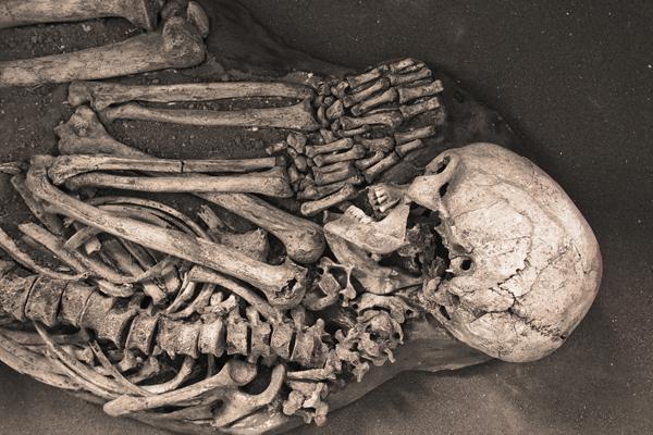 Oberkörper und Kopf eines menschlichen Skeletts in der Archäologieausstellung des Naturkundemuseums