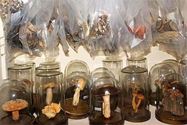 Sammlung verschiedener Pilze