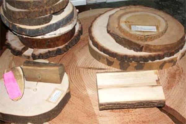 Xylothek: verschiedene Holzscheiben verschiedener Bäume